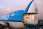 Crew von Martinair Cargo festgenommen