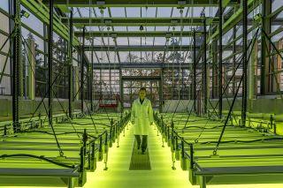 Biosprit aus Algen: Forschung an der TU München